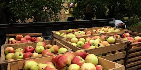 Volunteer Day - Apple Harvest tickets