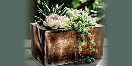 Virtual Workshop - Rustic Succulent Box tickets