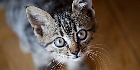 Cat Neuter Clinic - MALE CATS, 40 SPOTS tickets