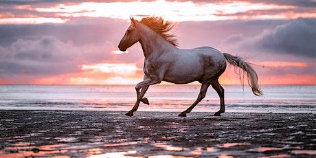 Pferde in Bewegung - Knackscharf & in Action fotografieren Tickets