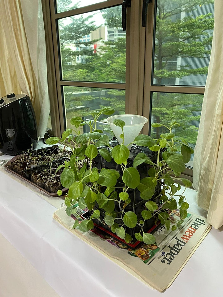 Farm Day Out Workshop: Low Cost High Yield Urban Farming with James Lam image
