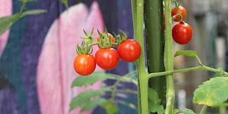 Vegetables  & Other Edibles - Piedmont Spring Gardening Series tickets
