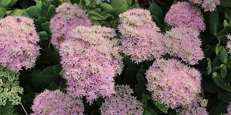 Herbaceous Ornamentals - Piedmont Spring Gardening Series tickets