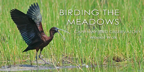 Birding the Meadows tickets