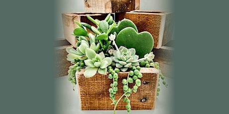 Virtual  Valentine's Day Succulent Workshop tickets