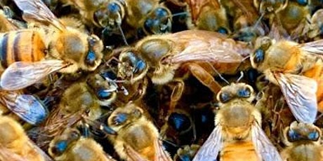Willie's Honey Co Pollinator Workshop tickets