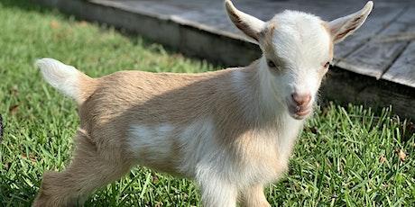 Goat Yoga Houston- Nett Bar Kidding Season tickets