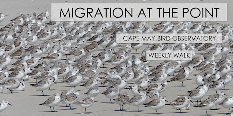 Migration at the Point tickets