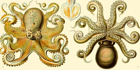 The Octopus & Evolution of Intelligent Life with Peter Godfrey-Smith, Zoom tickets