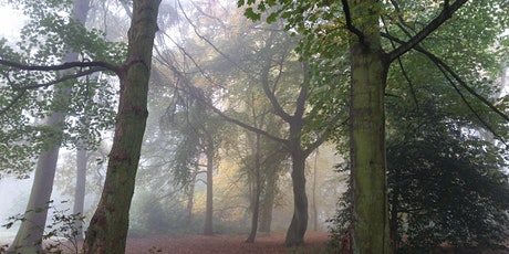 Virtual Forest Bathing Wellbeing Walk tickets