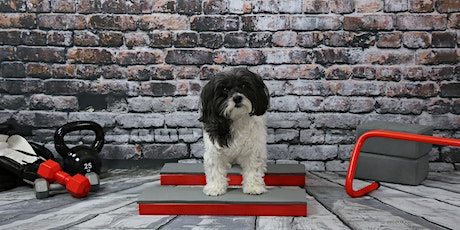 Canine Only Fitness  (6-weeks Online Classes) tickets