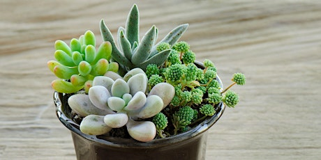 HARVEST DAY OUT: FAMILY WORKSHOP: My Mini Succulent Garden tickets