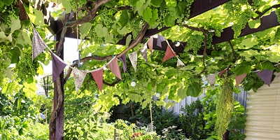 Cool your home with trees and vines