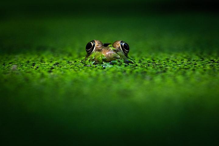 Capturing Wildlife Near and Far image