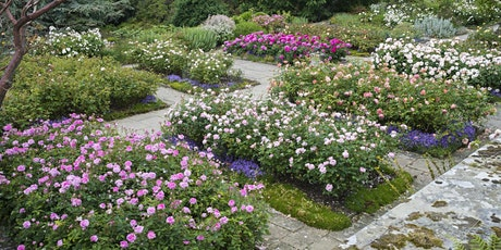 Rose Workshop with Renowned Rosarian Michael Marriott tickets