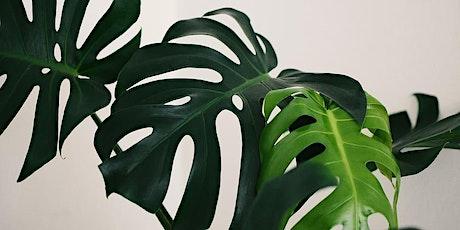 Beginners Guide to Indoor Plants tickets