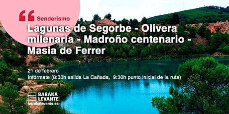 LAGUNAS DE SEGORBE, OLIVERA MILENARIA,  MADROÑO CENTENARIO  MASIA DE FERRER entradas
