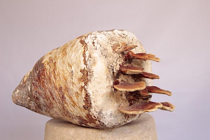 Imagen de Curso de Micomateriales: Biofabricación con Micelio de Hongos