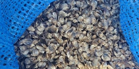 Sci-Cafe Oyster Corps: Recycling Oyster Shells for Shoreline Restoration tickets