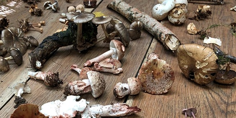Foraging Workshop - Autumn Foraging, Cooking & Lunch at Arley Hall tickets