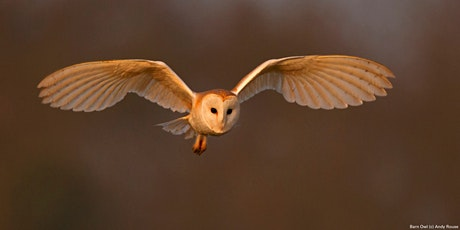 Members Only Online Talk - Barn owls tickets
