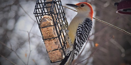 Winter Bird ID tickets