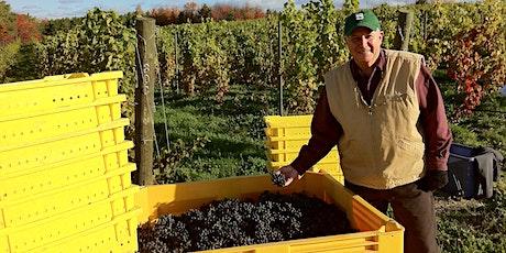 Virtual Wine Dinner with Verterra Winery tickets