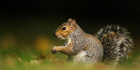 Grey Squirrels in the UK: An Unnatural History? tickets
