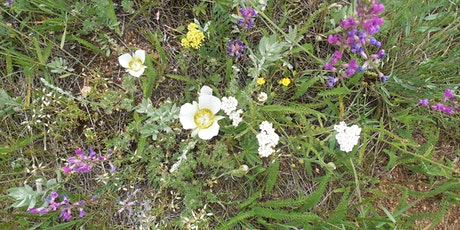 Virtual Wildflower and Weeds Walk @ Caribou Ranch tickets