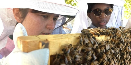 ONLINE workshop -- Beginning Beekeeping: The Basics and Starting a Hive tickets