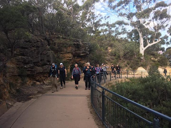 Women's Fern Bower Blue Mt Day Hike // Sunday 31st October image