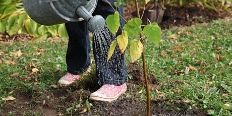 Caring for Your Green Yard in Fall tickets