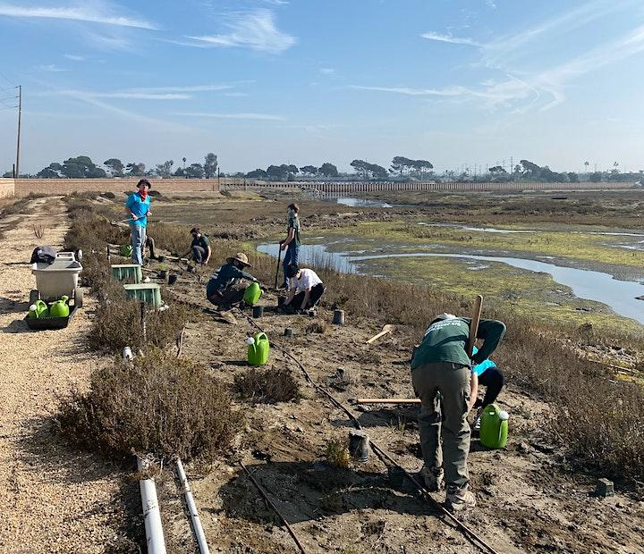 OCH Restoration at Huntington Beach Wetlands Conservancy image