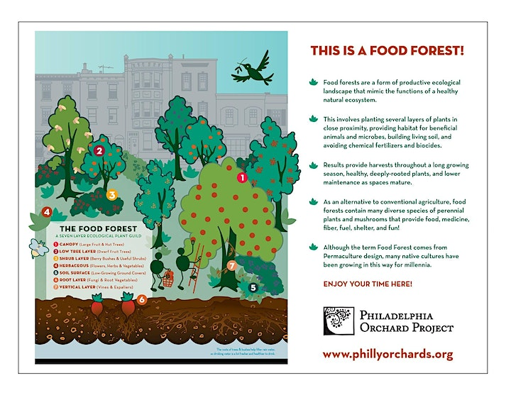 Food Forest Pruning Day image