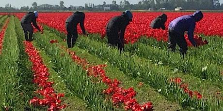 PAWA Paints Skagit Tulips Take Two 2021 tickets