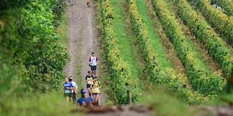Wine Run 2021 - Pacotes de Viagem ingressos
