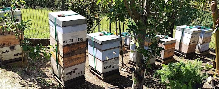 Hands-On Urban Beekeeping  PART 1 image
