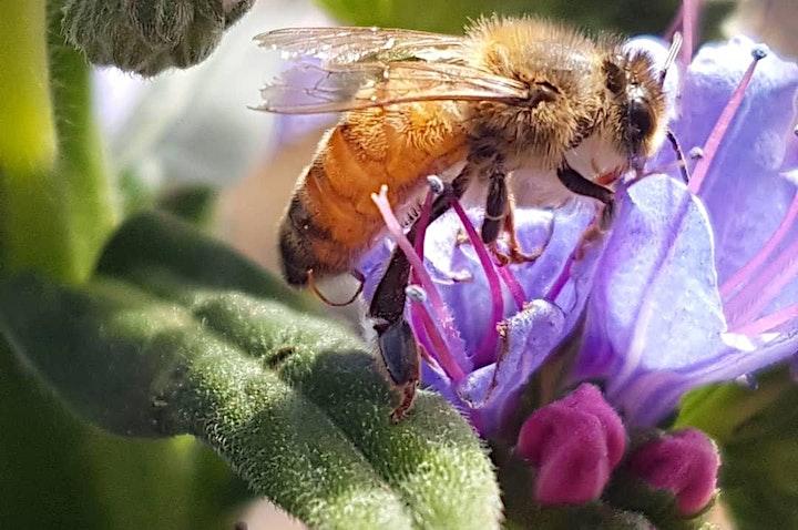 Honey Tasting & Bee Friendly Gardening Workshop image