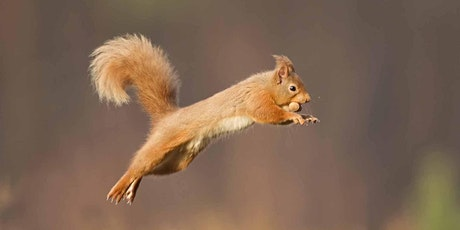 Red Squirrel Conservation tickets