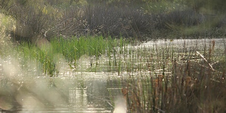 WET Workshop: Minimising mosquito risks in wetlands and urban landscapes. tickets