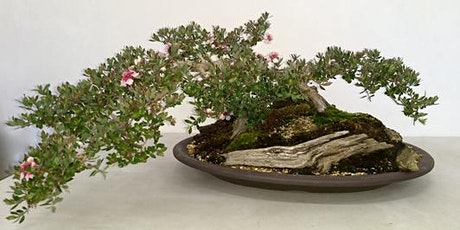 Copy of Australian Plants as Bonsai 2021 Exhibition Canberra Bonsai Society tickets