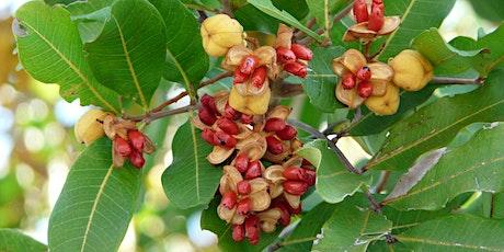 Invasive Species Series, Part 1: Invasive Plants Near You, Part 1 (webinar) tickets