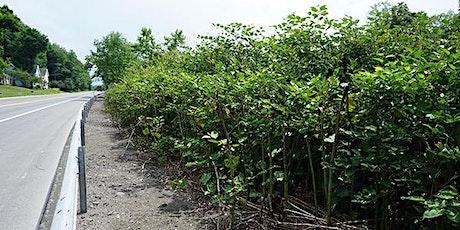 Weeds to Watch For: Vegetation Management & Invasive Spp on Municipal Lands entradas