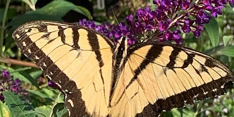 Butterfly Gardening Tickets