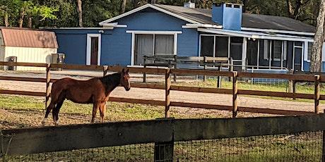 CANCELED: Hurricane Prep for Horses and Backyard Livestock (webinar) tickets