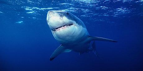 Coastal Sharks of Florida (webinar) tickets