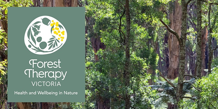 Using Forest Therapy in Your Counselling Practice image