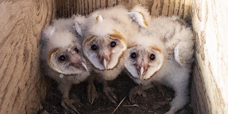 Wild Sarasota: Owls of Florida (webinar) tickets