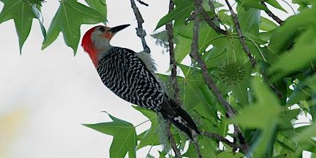 Wild Sarasota: Woodpeckers of Florida (webinar) tickets