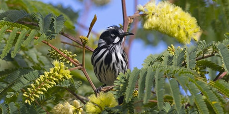 Creating Native Habitat Gardens in Sydney's East tickets